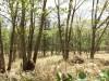 【売土地】上士幌の山林。599.55坪